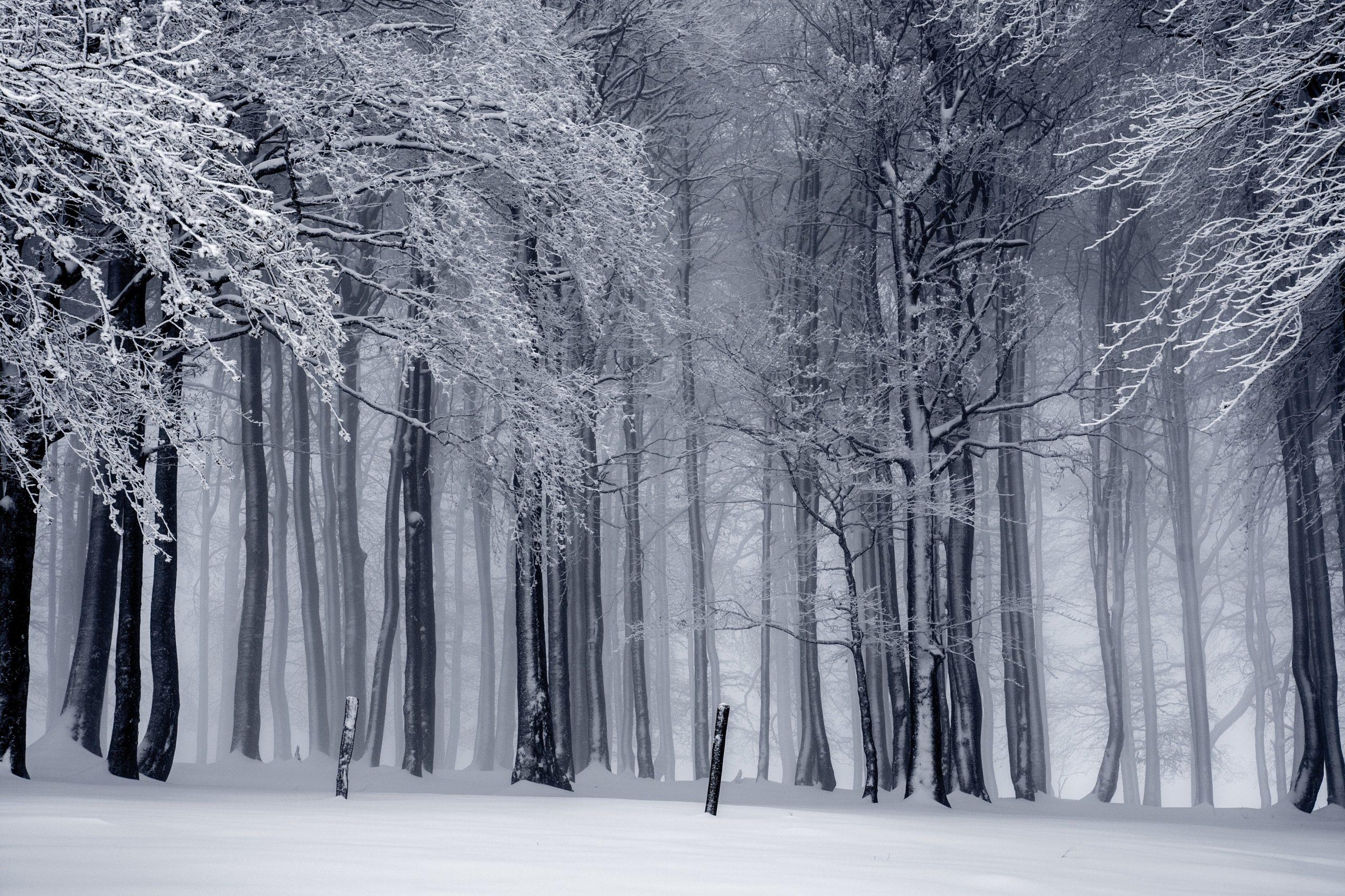 Episode 38 : « Ta vie avec »  un deuil en hiver